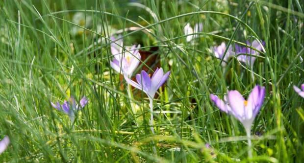 Ovaj tjedan stiže nam proljeće