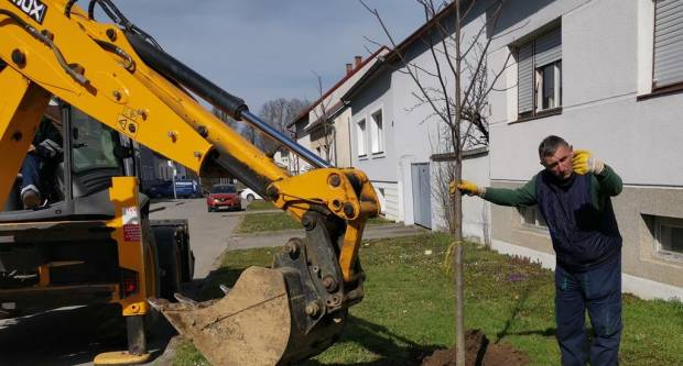 Zasadi stablo, ne budi panj: U nacionalnu kampanju kolektivne sadnje stabala uključili se Komunalac i Grad Požega