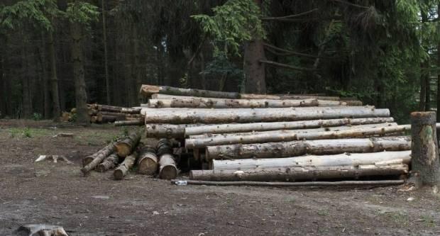 Platio drva za ogrjev koja nikada neće vidjeti