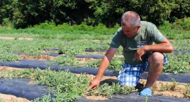 Željko Šimić iz Bjeliševca: Novac za štetu od tuče nije dovoljna pomoć, trebaju nam savjeti što dalje