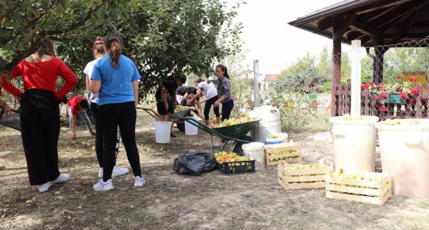 Lipički osnovnoškolci danas odradili berbu jabuka u školskom voćnjaku