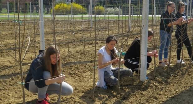 Učenici požeške Poljoprivredne škole zasadili novi voćnjak s oko 5000 sadnica