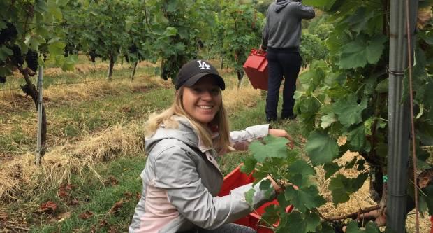 Međunarodna berba grožđa u vinogradu požeškog Veleučilišta u Podgorju