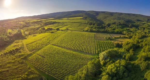 Objavljen je popis proizvođača s utvrđenom kvotom vina za skladištenje