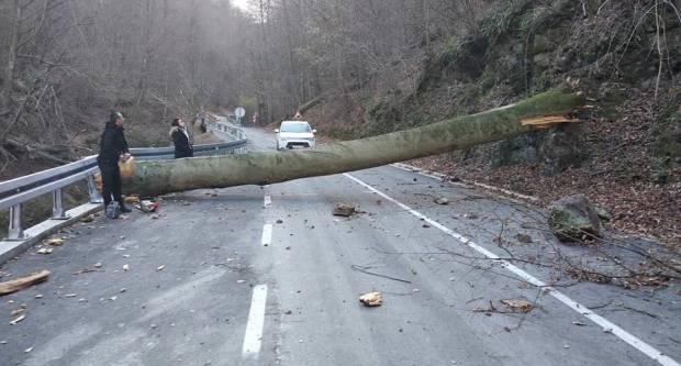 Jak vjetar stvorio probleme na Jankovcu ! Svi koji su planirali na Jankovac neka odgode svoju posjetu