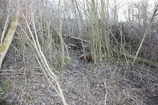 38-godišnjak pronašao minu u krošnji stabla u voćnjaku
