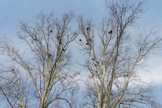 Građani mogu odahnuti: Nazire se kraj mukama s vranama. Ruši se Zvečevački park