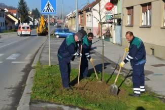 Zeleni tunel: Dubrovačka će postati aleja lipa
