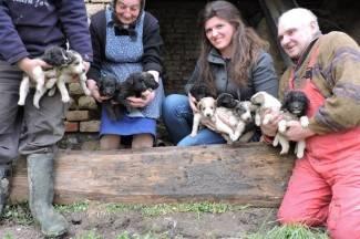 Ovoliko slatkoće na jednom mjestu se rijetko viđa: 11 štenaca iz krušne peći traži dom (foto)