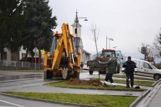 Uređuje se drvored i na zapadnom ulazu u grad: Posađeni javori u Zagrebačkoj