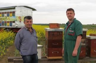 ¨Mraz je uništio 50 posto bagremove paše, pčele bi mogle biti gladne¨