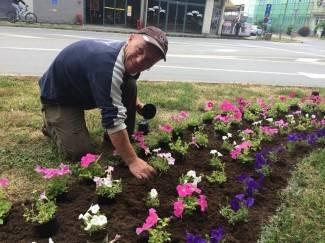 Pleternica u proljetnom ruhu: Cvijeće u centru grada