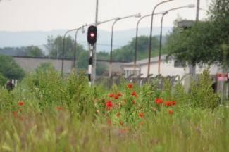 Vaše fotografije: Priroda pojela tračnice na Željezničkom kolodvoru Požega