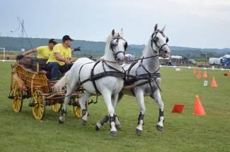 Konjogojstvena udruga ¨Valis Aurea¨ ima 79 grla, planiraju radionicu o uzgoju konja