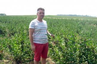 Ideja za biznis: ¨Aronija čisti organizam, zdrava je, a u poljoprivredi slabo zastupljena¨
