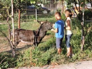 Jura je omiljen među djecom: ¨Najviše voli trčati dvorištem. Prava je maza i obožava se češkati¨