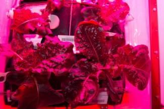Astronauti kušali prvu salatu koju su uzgojili u svemiru (video)