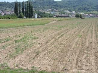 ¨Poljoprivrednici dolaze očajni i sa sobom donose stradale biljke¨