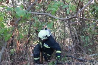 Centar 112 dobio dojavu o požaru na Papuku; na intervenciju upućeni vatrogasci DVD-a  Velika