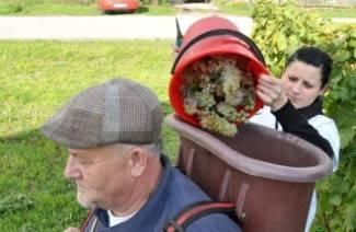 Prvo vino kaptolačke Udruge vinogradara: Degustirat ćemo ga na Martinju i u drugim prigodama