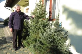 Prodavači upozoravaju: Svaki domaće uzgojeni bor bolji je od uvoznog