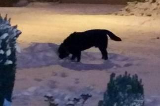 Labrador i dalje luta i napada prolaznike: ¨Poduzmite nešto, u ponedjeljak djeca kreću u školu¨