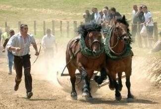Striježevica: Natjecanje konja u vuči klada