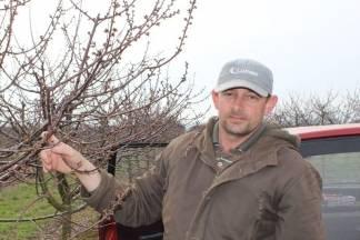 Krenula sezona rezidbe voćki: ¨Voćnjak je jedna velika tvornica na otvorenom¨