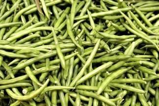 Posjetite radionicu o ekološkom uzgoju povrća na temu mahunarki
