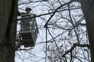 Opet muke s vranama u Zvečevačkom parku