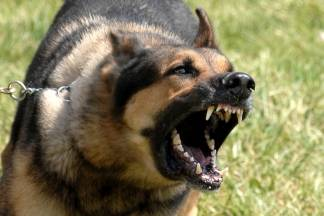 Pas bez nadzora na pješačkoj stazi ugrizao 59-godišnjakinju