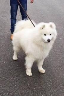 Na području Vidovaca nestao pas, čitateljica moli za pomoć oko pronalaska
