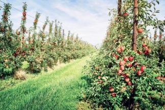 Otuđio veću količinu voća iz voćnjaka na širem području Požege