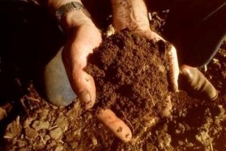 Kako sami možete doznati je li tlo kvalitetno?