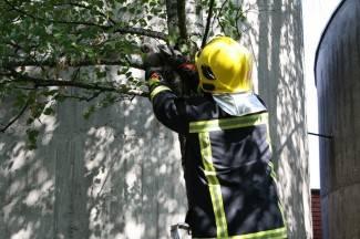 Združena akcija policije i vatrogastva: Spašavanje sove