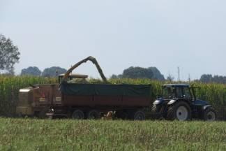 NTC Gaj počeo isplatu proizvođačima kukuruzne silaže