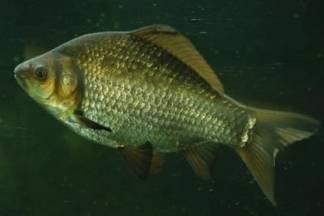 Pobjednici županijske lige sportskog ribolovnog saveza