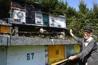 Pčelar iz Vesele radi jedinstvene košnice
