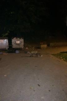 Lisice na dječjem igralištu pod gradom