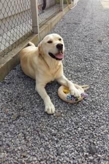 Tko je vlasnik ovog psa?