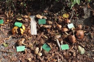 Izložba gljiva na Jankovcu