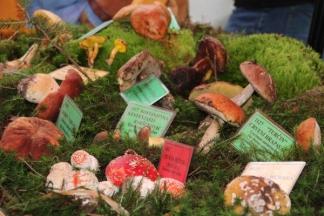 Izložba gljiva u parku na Orljavi u Požegi:15.10.2016.