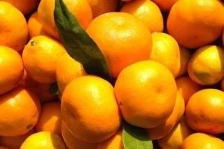 Prodaja neretvanskih mandarina i sutra 1.11.