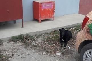 Dva psa mjesecima lutaju kroz Bektež