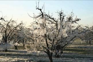 Poljoprivrednici za štete od mraza iz travnja 2016. dobili 20 milijuna kuna, požeško-slavonska županija  424 tisuće i 768 kuna