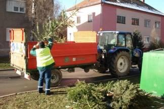 Od 9. do 13. siječnja vrši se odvoz božićnih drvaca na području grada Požege