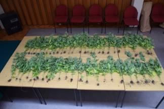 Prilikom pretrage kuće policija kod Veličanina pronašla marihuanu