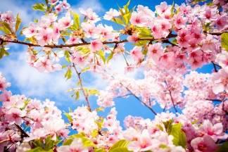 Prvi dan proljeća uz sunčano vrijeme i temperaturu do 23 °C