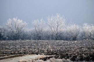 Eko metode oporavka biljaka nakon ledenog vala
