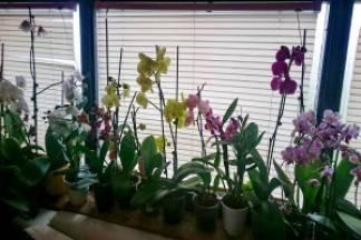 Kako uzgojiti orhideje, simbol ljubavi i ljepote?